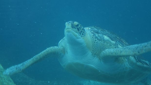Sea Turtle by EndOfGreatness