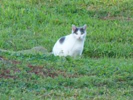 Cat in the Ditch by LaEmperatrizMariana