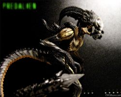 Predalien Wallpaper by C91