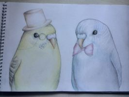 My birds like a sir. by Alisssvic