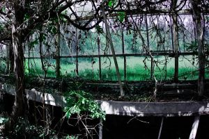 abandoned glasshouses VII by WilhelmBielawa
