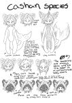 Baby Cashan species by Stargliderxp13