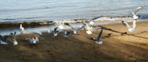 Seagulls in the early morning by CouchyCreature