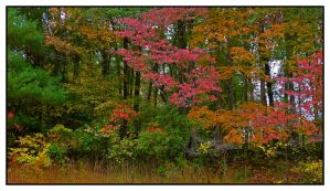 Fall tree line.L1020754, with story by harrietsfriend