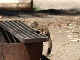 Ground squirrel 2 by P8ntBal1551