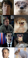 Sherlock Animals by ArtfulDodger112