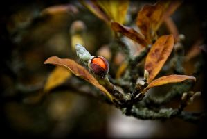 .:.Autumn's Fruit.:. by Ailedda