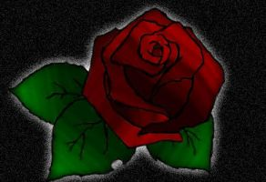 Rose by Dugters