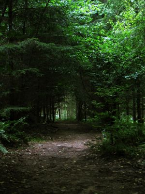 forest path 07 by Pagan-Stock