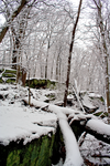 Winter Forest Stock 23 by AreteStock