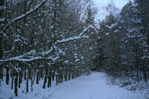 Stock background snow forest V by MariKariS