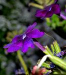 Tiny purple flower by TomKilbane