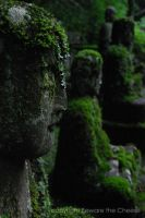 Moss Complextion by candycritic