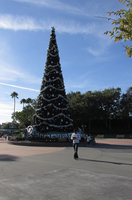 christmas Tree WDW Hollywood Studios 3 by WDWParksGal-Stock