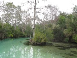 052 Weeki Wachee Springs by crazygardener