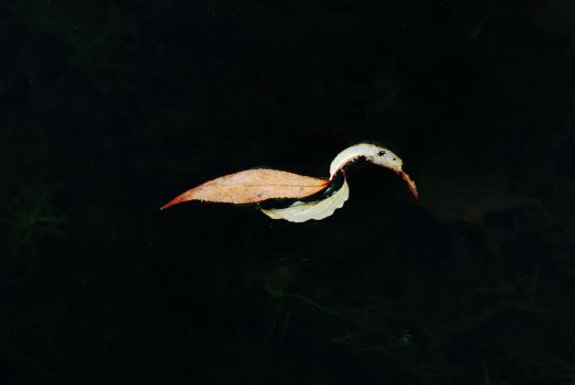 Willow Leaf Swan by EarthHart