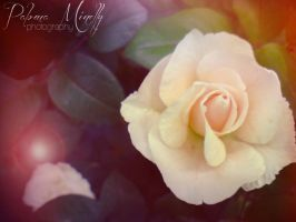 Gentle by PMinelly