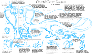 Cave Dragon Reference Sheet by Tikara-the-Mew
