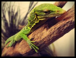 lounge lizard by fuamnach