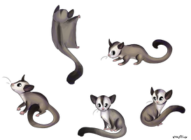 sugar gliders by Nyappy-muffin
