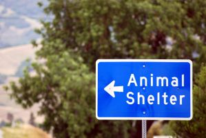 Animal Shelter-Stock by Thorvold-Stock