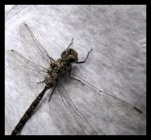 Michael's Dragonfly by CitizenOlek