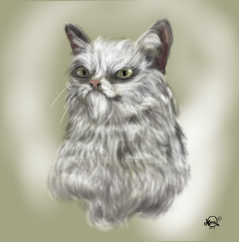 cat with an attitude by Expressowl