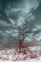 Winter Tribute by Point-Blank-Silence