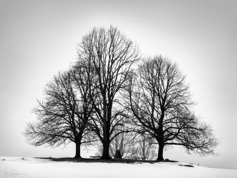 3 trees solitaire group b/w by MatzeR