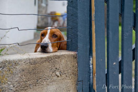 Looking on by MI6gunny