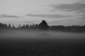 Foggy evening by Tapire