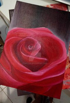 Rose (Close up) by Miilo18