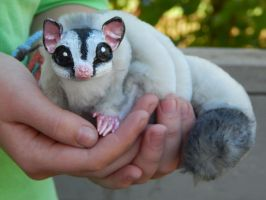 Sugar Glider Art Doll by DLChart