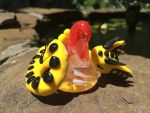 Yellow and black dragon on glass hershy kiss by skippy123456