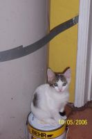 Kitten on a Paint Can by Tejava