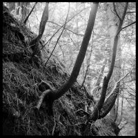 2013-152 Eroded bank by pearwood