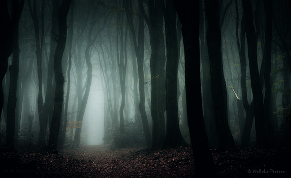 The Pale Forest by Nelleke