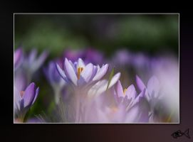 Fairy Flowers 2 by eyefish