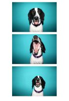 Dog in a photobooth by rafaellapapa