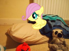 Fluttershy's first night in my house by jetrixwolf