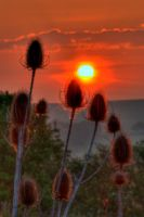 Teasles at Dawn by Tangent101