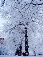 Frozen trees by Betagalactosidase
