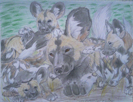 """African Painted Dogs"" by mysteriouswhitewolf"
