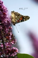 Butterfly by EliseJ-Photographie