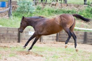 Km TB about to kick out back legs up side view by Chunga-Stock