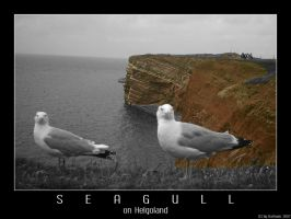 Seagull on Helgoland by Darkaan