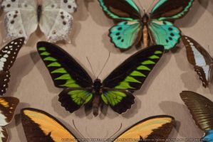 Butterflies : 13 by taeliac-stock