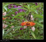 The Flower And The Butterfly by AlamatJacob