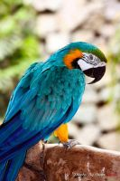 Parrot 2 by reddes