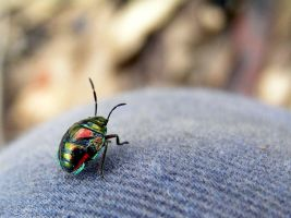 colourful bug by j-m-s